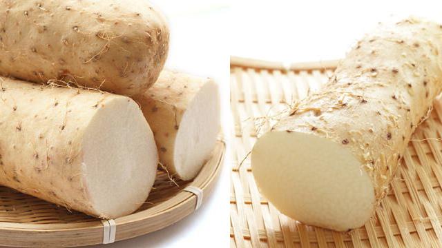 山芋と長芋の比較画像