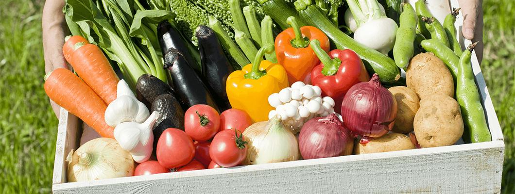 箱いっぱいに詰められた野菜