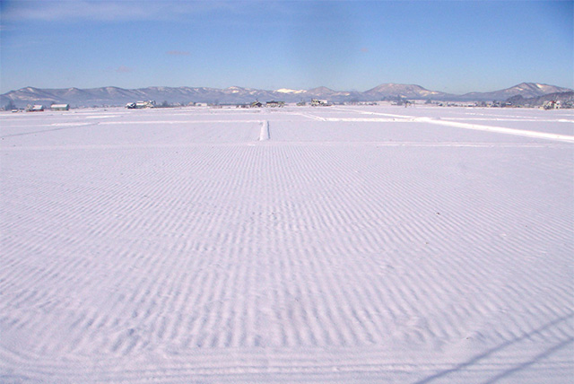 雪が積もった田んぼ