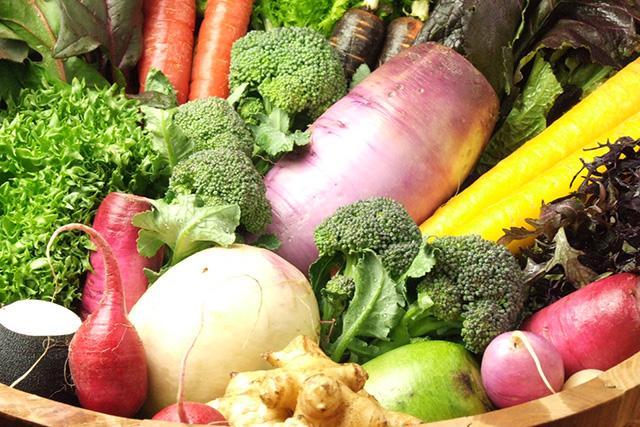 綺麗に並べられた鎌倉野菜