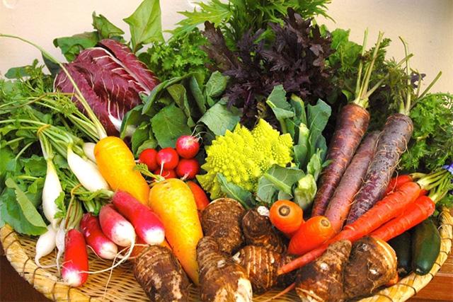 様々な種類の鎌倉野菜