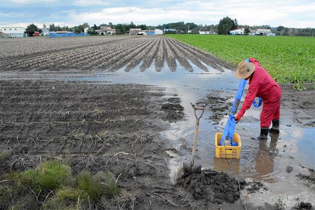 台風で冠水した畑