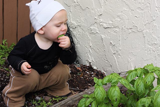 バジルを食べる子供