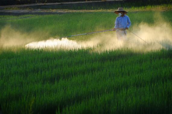 農薬を散布する中国の農家