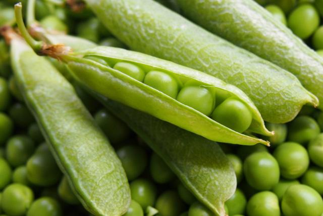 新鮮なえんどう豆