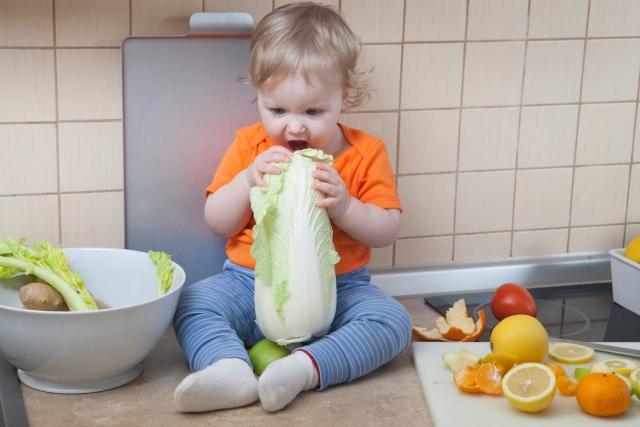白菜を食べる子供