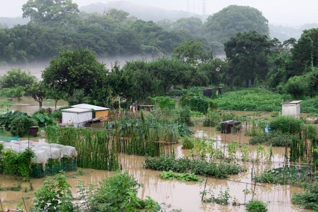 台風被害を受けた畑